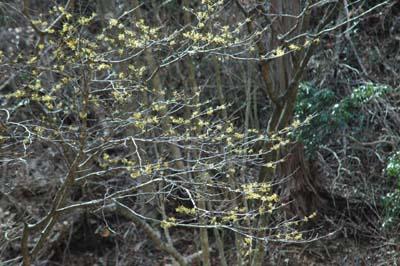 春の花 探訪8