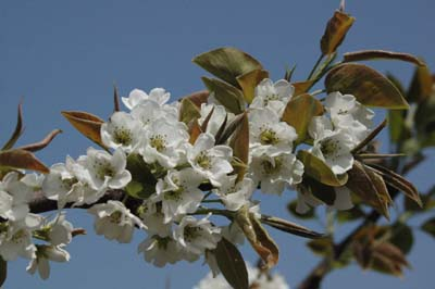 春の花 芝桜2