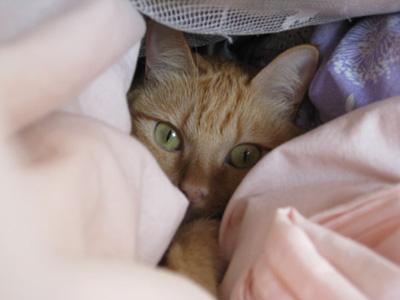 猫も布団が恋しい2