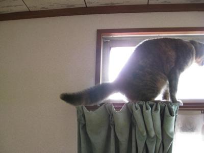 猫も布団が恋しい3