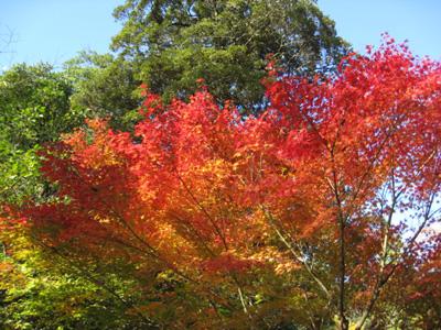 秋の色冬の色2