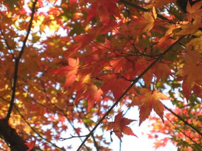 秋の色冬の色3