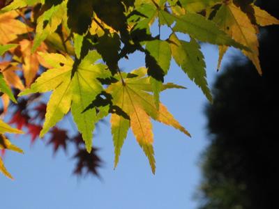 秋の色冬の色4