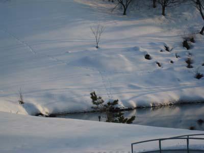 雪のゴルフ場にて2