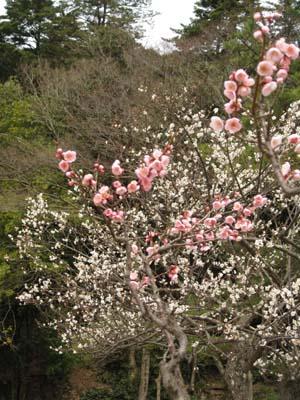 春の花 探訪1