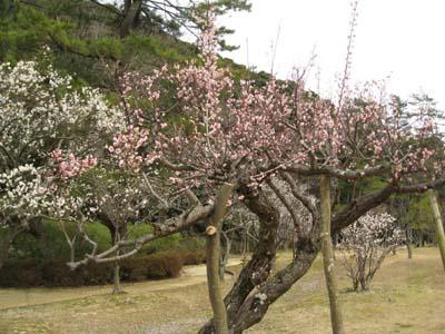 春の花 探訪2