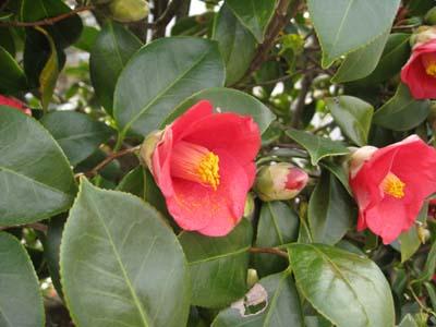 春の花 探訪4