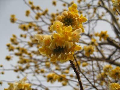 春の花 探訪5