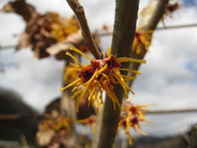 春の花 探訪9