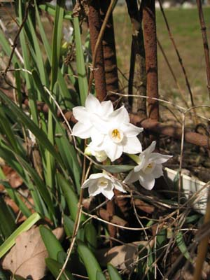 春の花 探訪10