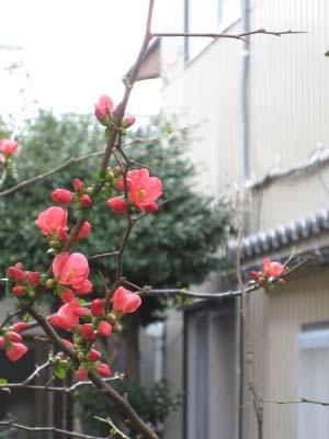 咲いた咲いた5