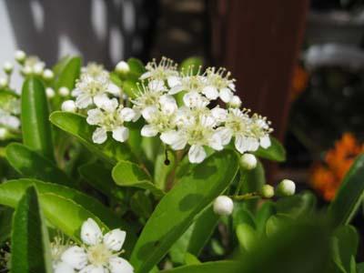 庭に咲く花9