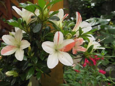 庭に咲く花10