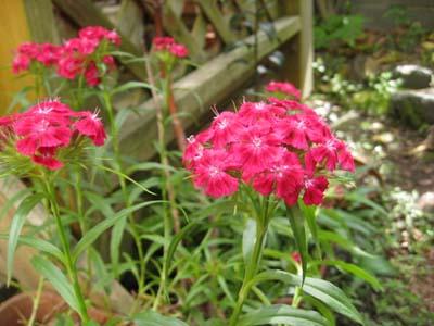 庭に咲く花11