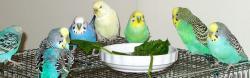 鳥プルボギー達