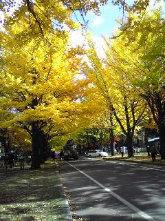 北大構内銀杏並木2007.10.31ー2