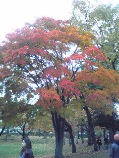 北大構内銀杏並木2007.10.31ー3
