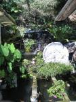 そのお店の後ろにある小さな滝