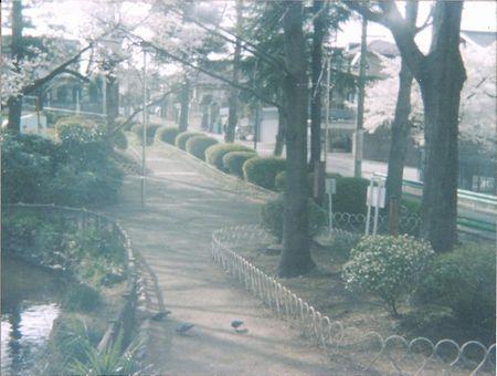 ベイビーホルガ 公園