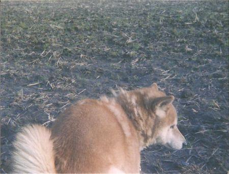 ベイビーホルガ 犬