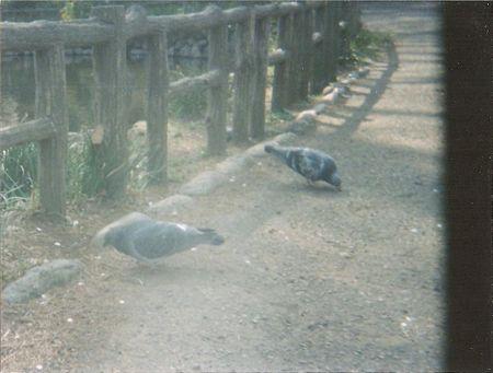 ベイビーホルガ 公園2