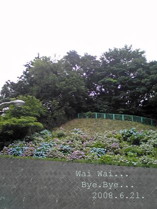 2008.6.21. 病院の紫陽花たち ワイワイ バイバイ