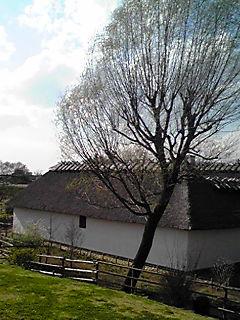 デンマーク農家 PA0_08 のコピー