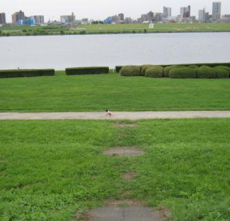 川沿いの公園へ散歩