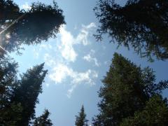 夏ロッキー_散歩中に見る空