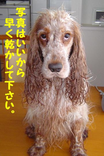 とにかく乾かしてほしいの