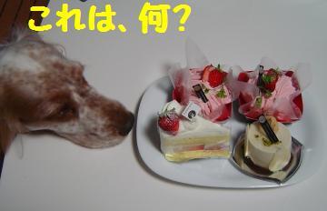 シュウェットカカオのケーキ
