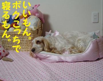 DSC07863.jpg