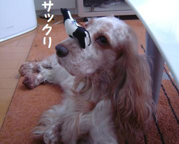 PHOTO021.jpg