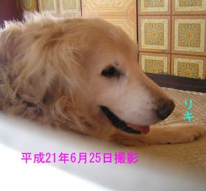 平成21年6月25日撮影・リキ