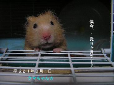 平成21年8月1日クマ