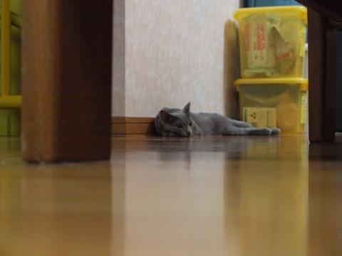 まったりニコライ(2009.08.24)