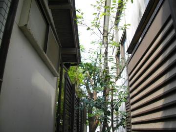 藤沢市鵠沼海岸K邸剪定後3