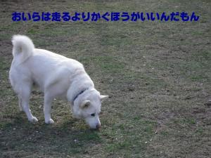 20070429215055.jpg