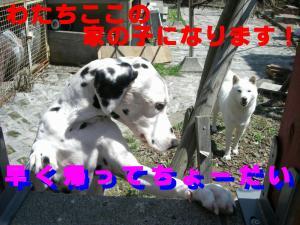 20070430175818.jpg