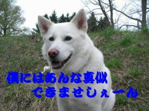 20070511105216.jpg