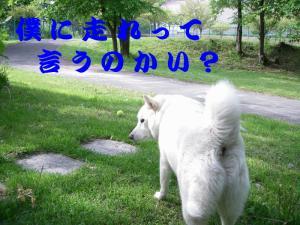 20070612233252.jpg