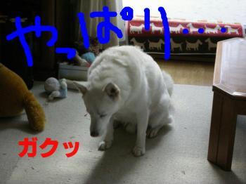 20071019213724.jpg