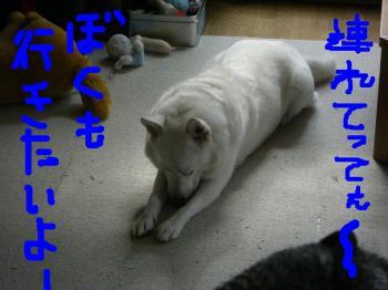 20071019213743.jpg