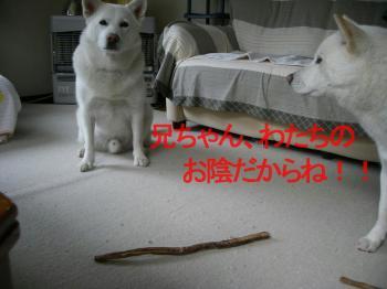 20071111231300.jpg
