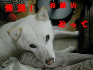 DSCN6978.jpg
