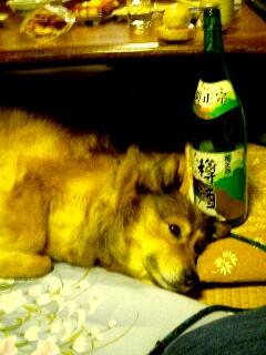 indy sake