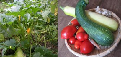 キルトの先生の家庭菜園