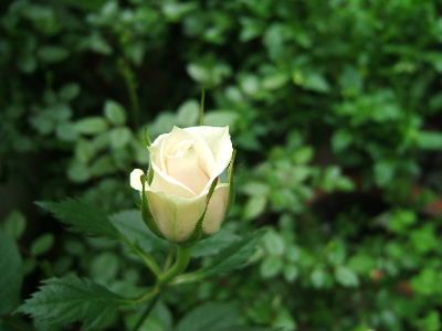 2008_0509画像0155