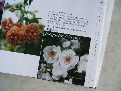 2009_1002画像0223