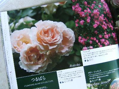 2009_1002画像0221